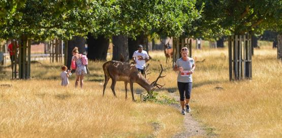 Run Richmond Park 5k and 10k Race 12