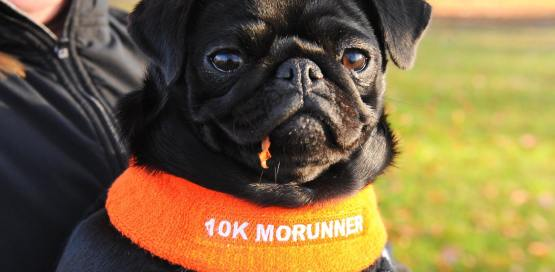 The 5k and 10k Aberdeen MoRun